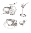 hand drawn lemon honey spoon coffee cup vector image