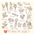 Set drawings of herbs for design menus recipes vector image
