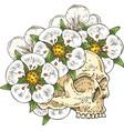voodoo skull in white flower wreath vector image