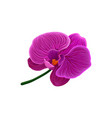 beautiful purple orchid flower vector image vector image