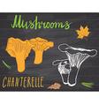 Mushrooms sketch doodles hand drawn set vector image