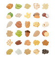 nuts flat icons pack vector image vector image