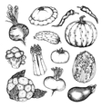 Organic natural vegetables set vector image vector image