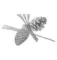 pine cone arizona pine vintage vector image vector image