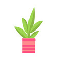 potted flower isolated on white banner vector image vector image