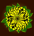 a huge orange sunflower with a middle of the seeds vector image vector image