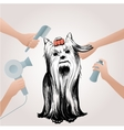 Beauty Pets Salon Concept vector image vector image