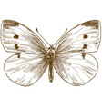 engraving antique small white butterfly vector image vector image
