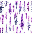lavender in provence field seamless pattern vector image