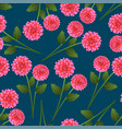 pink dahlia on indigo blue background vector image vector image