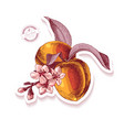 sticker with hand drawn peach branch vector image