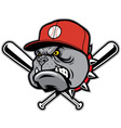 bulldog as a baseball mascot vector image vector image