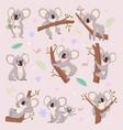 Koala characters wild bear australia cartoon