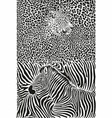 leopard and zebra with background vector image vector image