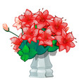 red flowers in a vintage ceramic vase isolated on vector image