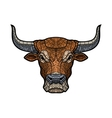 Bull head isolated vector image vector image