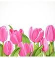 Pink tulip on white background vector image