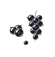 Black currant vector image vector image