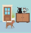 dog and cats sitting in furniture room house pet vector image