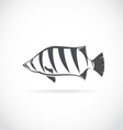 image of an Siamese tiger fish vector image vector image