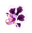 orchid phalaenopsis with spots purple and white vector image vector image