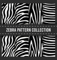 seamless pattern background zebra stripes print vector image vector image