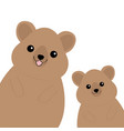 two quokka head face silhouette family set pink vector image vector image