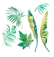 Watercolor palm leaves banana leavespapaya vector image