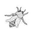 honey bee or wasp sketch isolated vector image vector image
