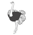 black and white ostrich vector image