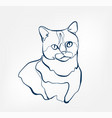 cat animal wild one line design vector image vector image