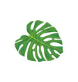 leaf of palm tree vector image vector image