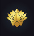 lotus flower beauty colored gold logo vector image vector image
