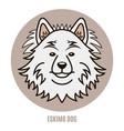 portrait eskimo dog vector image vector image
