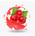 red currant in realistic juice splash vector image vector image