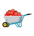 wheelbarrow and strawberry red berry in garden vector image vector image