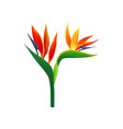 bird of paradise flowers vector image vector image