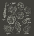 hand drawing set of cabbage vector image