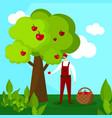 man farmer character pick apple harvest to basket vector image