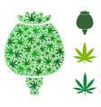 opium poppy mosaic of hemp leaves vector image