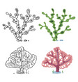 seaweeds coloring page with bright sample - coral vector image