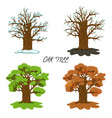 oak in four seasons isolate on a white background vector image