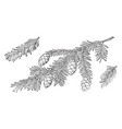branch canadian hemlock vintage vector image vector image