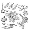 hand drawn culinary herbs and spices set vector image