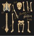 human bones image vector image vector image