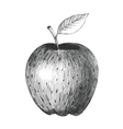 Sketch of an apple vector image vector image