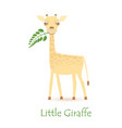 cute giraffe calf vector image