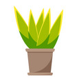 green home plant in brown ceramic pot flat vector image vector image