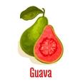 Guava fresh juicy tropical fruit icon vector image
