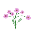Purple Yarrow Flowers or Achillea Millefolium vector image vector image